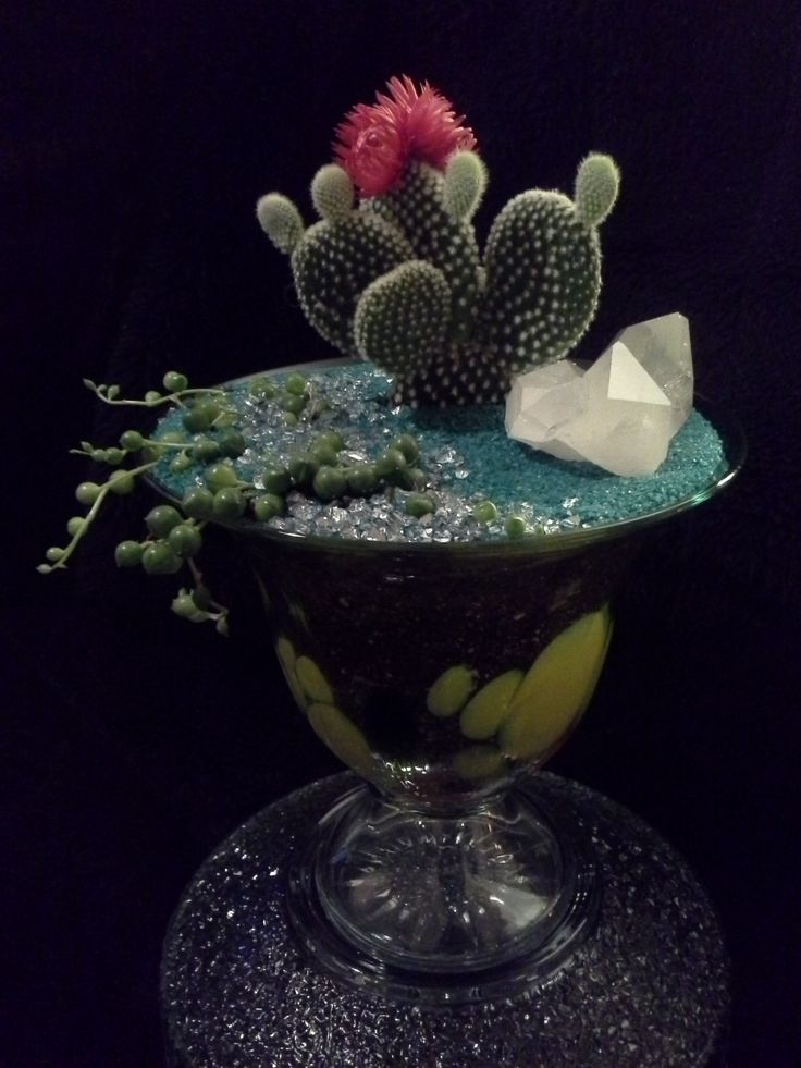 Angel Wing Cactus rarely flowers in a pot accentuated with a string of succulent pearls and a beautiful large Quartz Crystal Point Cluster set in a unique painted glass vase.........................$45.00 deansbaskets@gmail.com 604.603.5829 *browse my Facebook page! :) Special orders, special attention!
