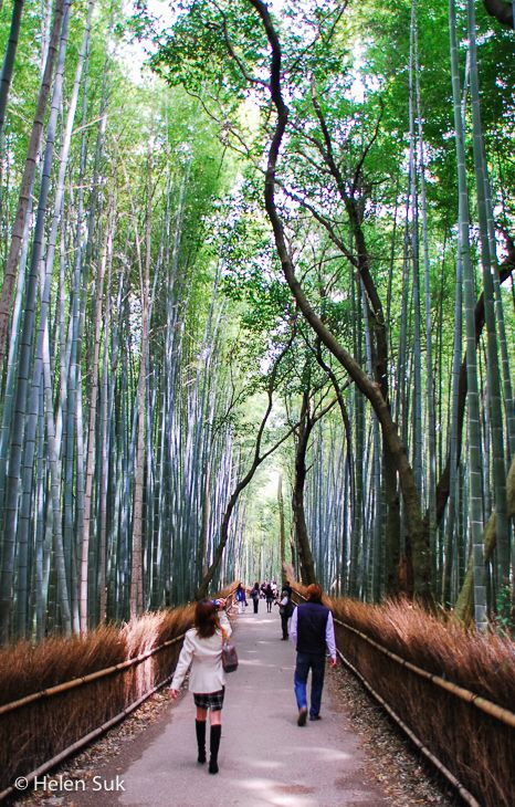 The famous bamboo grove at Tenryu-Ji in Kyoto. Click to see more of my favourite images from Japan.