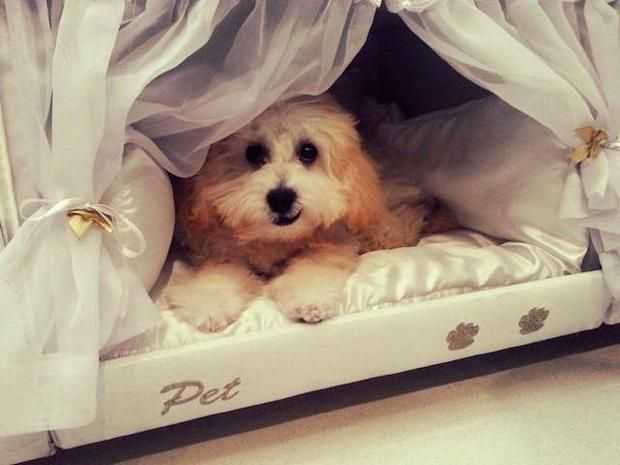 "Mattress Company Makes ""Bunk Beds"" for People and Their Pets"
