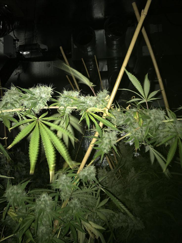 Find A Marijuana Doctor Read More Https Www Finddankweed