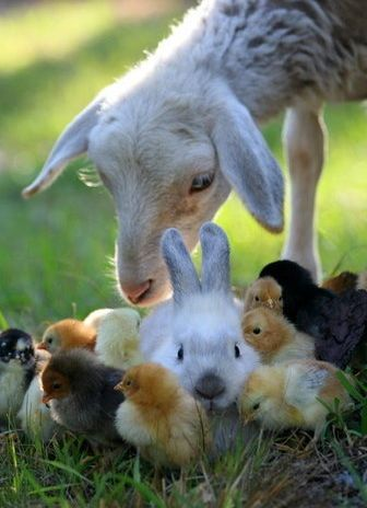 The only way to have a friend is to be one. ~Ralph Waldo Emerson