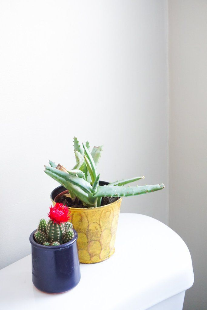 The 9 Best Houseplants For Bathrooms
