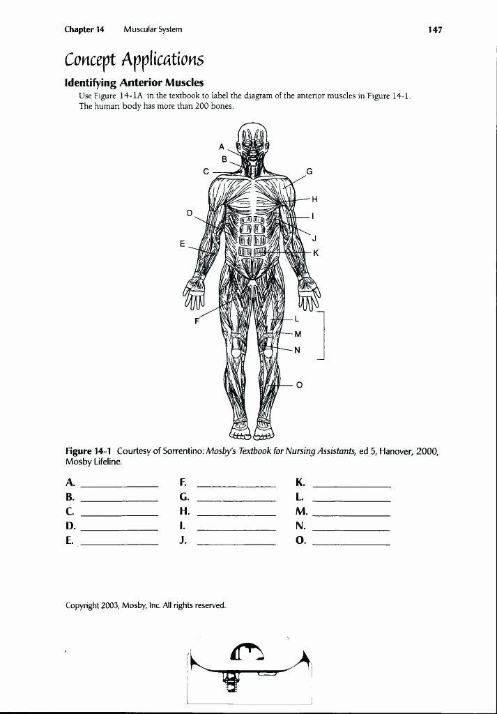 Printable Anatomy Labeling Worksheets Inspirational Funky