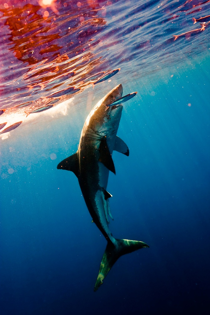 Pin by Tyler Mallory on Sharks Are So Cool Pinterest