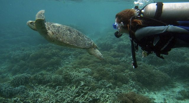 Sea turtle conservancy is a challenging and rewarding volunteer opportunity.