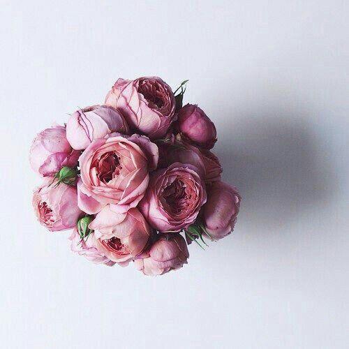 Blumenwiese Englisch 554 besten flower bilder auf blume basteln und blumen
