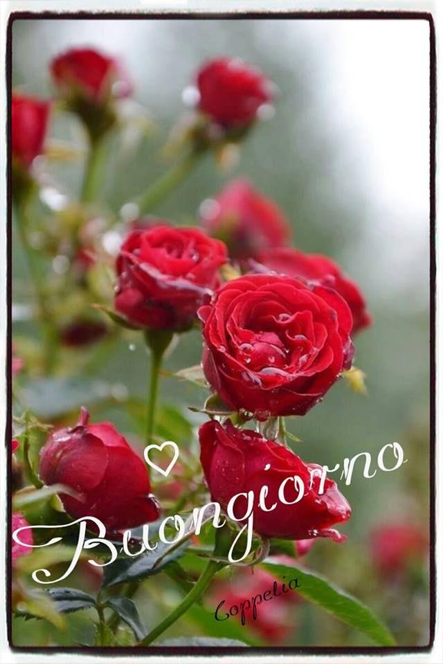 Be Different... www.warriorsproject.it Buongiorno #buongiorno