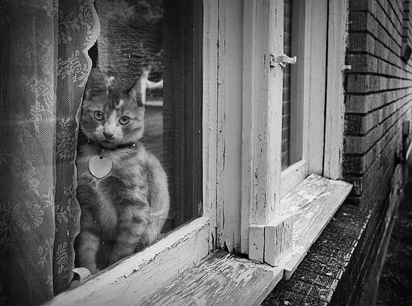 the world outsideBeautiful Cat, Kitty Cat, Alley Cat, Cat Small, Art, B W Photography, Attraction Cat, Windows Cat, Rain Cat