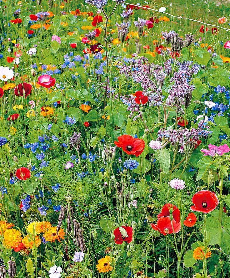Divoké květiny, záhonová směs
