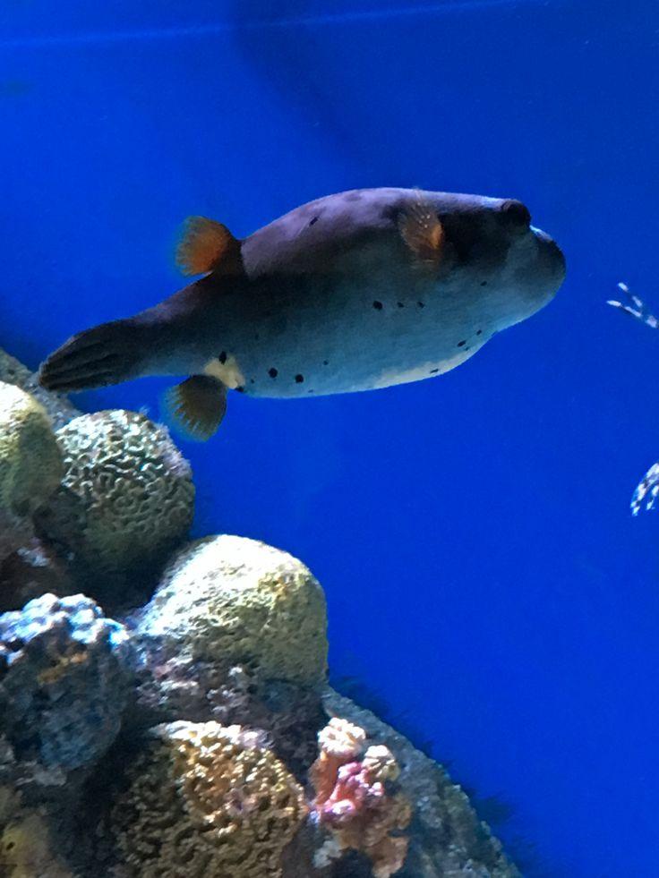 Best 25 new england aquarium ideas only on pinterest New england aquarium tickets
