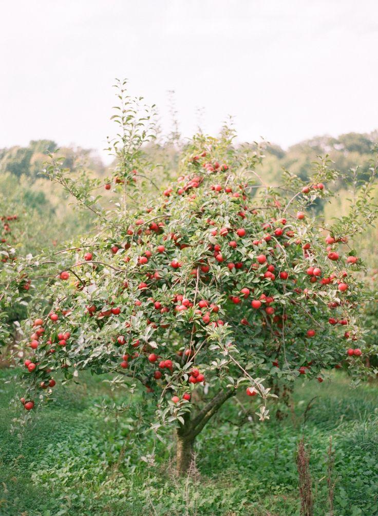 Best 20 Orchards Ideas On Pinterest Fruit Trees Fruit Tree Garden And Apple Orchard