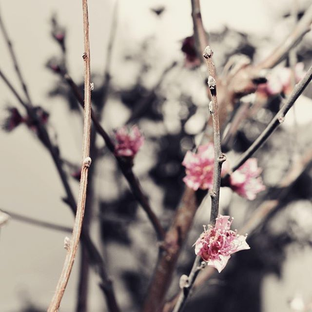 Winter blossom proves that life can be cold yet beautifully colourful.