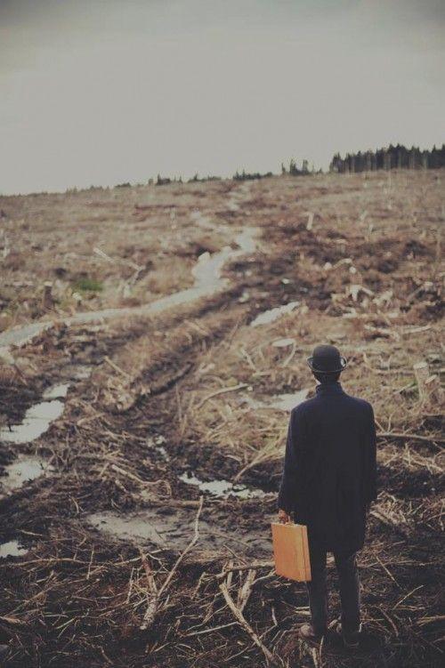 deforestation for paper facts