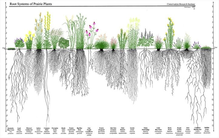 Upcoming Event: May 30 Raingarden Design & Maintenance with Native Plants - Down To Earth Services KC