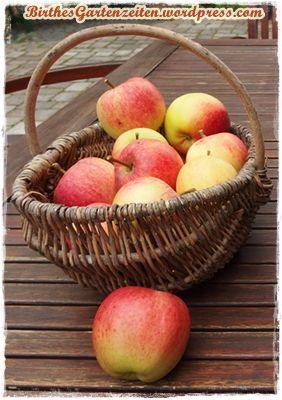 Bei Apfelallergie: Alte Apfelsorten ausprobieren, z.B. Gravensteiner !