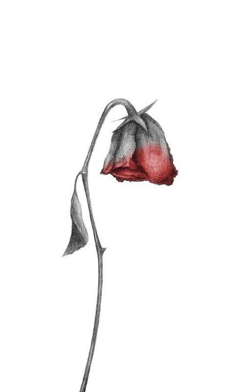 увядший цветок рисунок скорости света может
