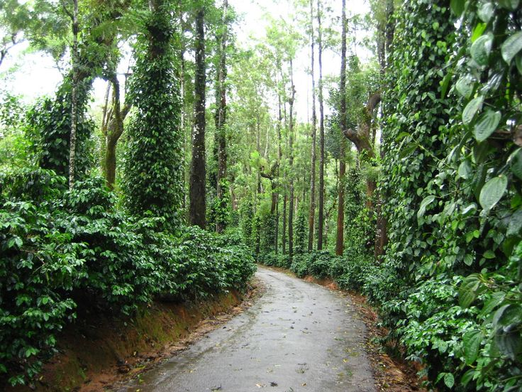 coffee estates in Coorg!