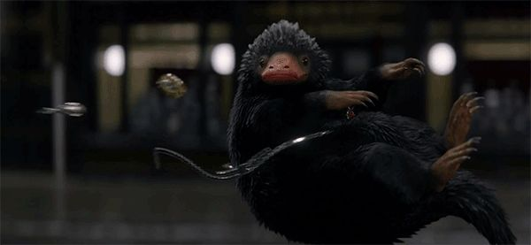 "http://www.revelist.com/movies/fantastic-beasts-niffler/5864/All hail The Niffler, swooping in to slay your ""Harry Potter""-verse faves./9/#/9"