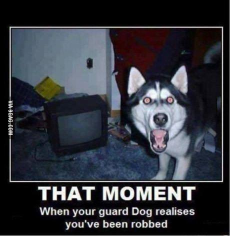 Huskies... Funny dogs