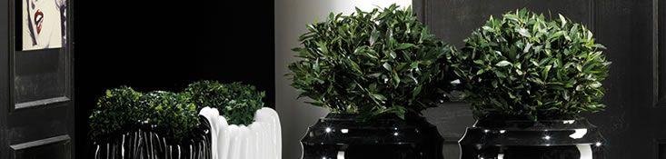Fiori secchi, fiori e piante artificiali, decori natalizi e pasquali vetrinistica | Bianchi Dino Srl