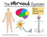 nervous system printables and lesson ideas. Great blog with all kinds of lesson resources.