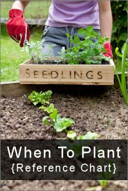 Informative guide for planting schedule