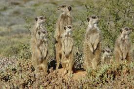 Meerkat Adventures, OUDTSHOORN