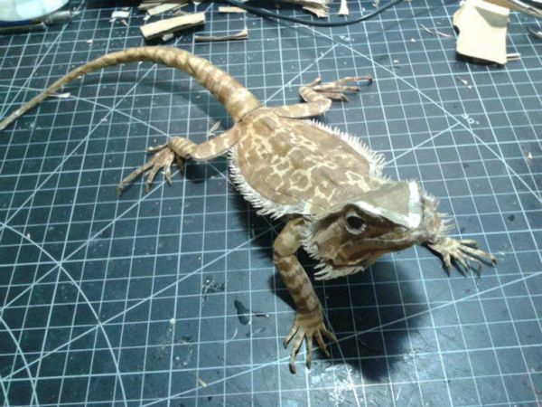 Just glancing at the bearded dragon, it's almost impossible to tell it's fake. Some crazy guy made this bearded dragon out of cardboard! Amazing :3 ~