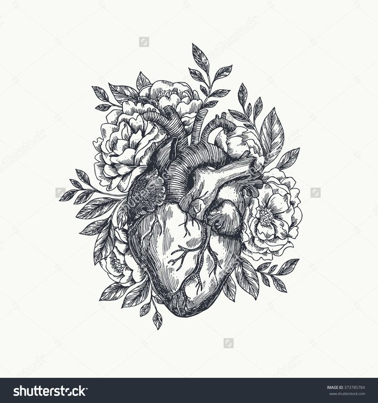 best 25+ anatomical heart tattoos ideas only on pinterest, Human Body