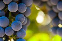 Resveratrol Antioxidants