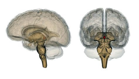 Mysteries of the Pineal Gland