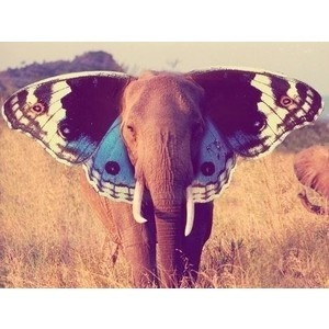 Elephant combined with butterfly - combining animals to create new ones / making an animals out of others