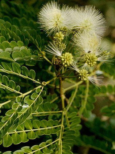 Тропическое Растение Направляющие