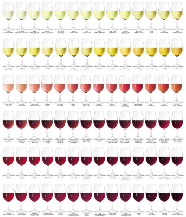 VinoTip - Wijn proeven