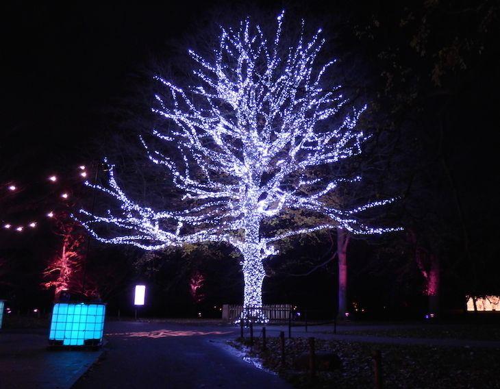 Kew Gardens Xmas Kewgardensxmas London Christmas Kew Gardens Christmas Christmas Experiences