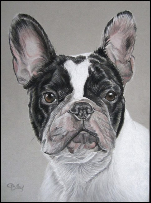 French Bulldog commissioned in A4 size