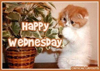 17 Best images about The Cat's of Wednesday on Pinterest ...