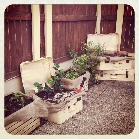 Veggie patch inspiration!  Twitter / MatthewleGrange: @WOOLWORTHS_SA This is my garden. ...