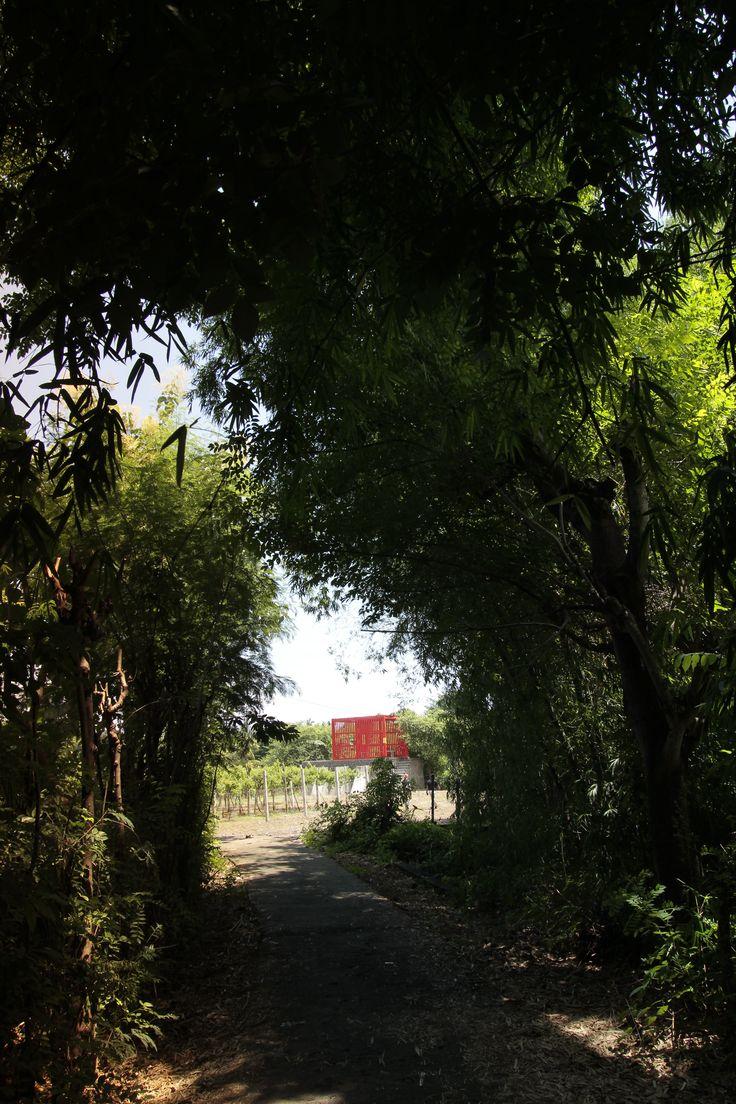 Hatten Wines, a stroll in the vineyards in Bali