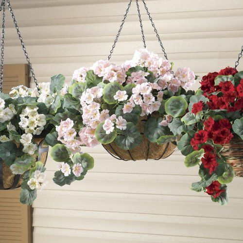 Best Hanging Basket Flowers For Hummingbirds : Best images about fuchsia upside down on