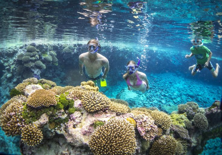 Planning to visit Nuie?  Read some of our tips here: https://mondotravel.co.nz/blog/97    #niue #tips #travel #mondotravelnz #therockofthepacific #therock #watersports #swimming #snorkelling #diving #fishing #caves #chasms #jungle #reef #coral #whales #whalewatching #dolphins #marinelife #nature #beauty