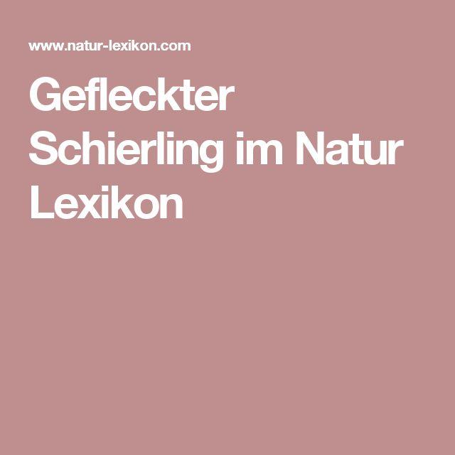 Gefleckter Schierling im Natur Lexikon