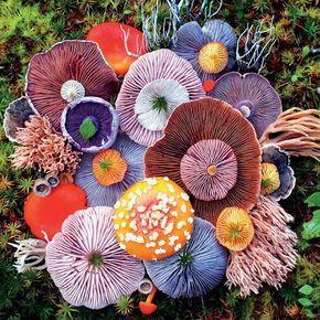 Mushrooms – Agaric – 750 Piece Puzzle