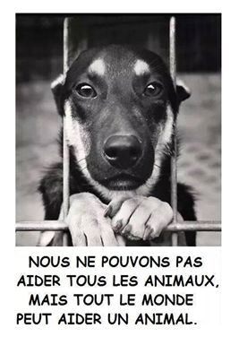 Nous ne pouvons pas aider tous les animaux, mais tout le monde peut aider un animal.