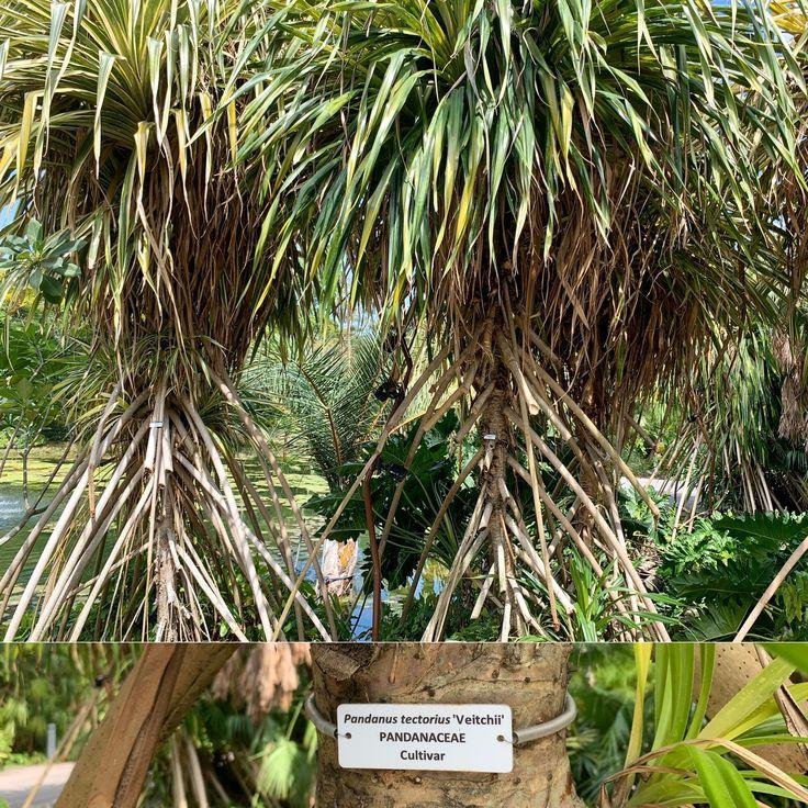 Pandanus in 2020 Gardens by the bay, Indoor waterfall