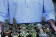 how to grow succulents...for the people who have even found ways to kill their cacti