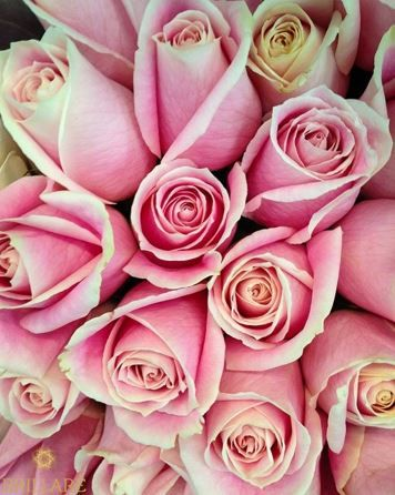 Floriography - the language of flowers. The rose meaning true love stronger then thorns.