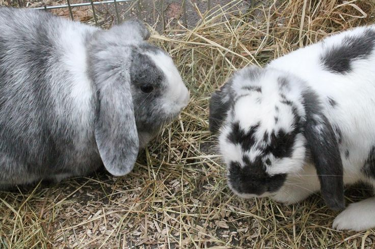 Daisy was 'blown away' with Boo today and hopped over to Fife. Another successful rabbit re homing by Buddies Bunnies Rescue.