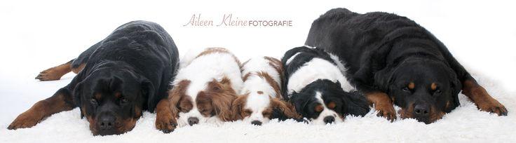 Een rij slapende honden   Aileen Kleine Fotografie. www.aileenkleine.nl