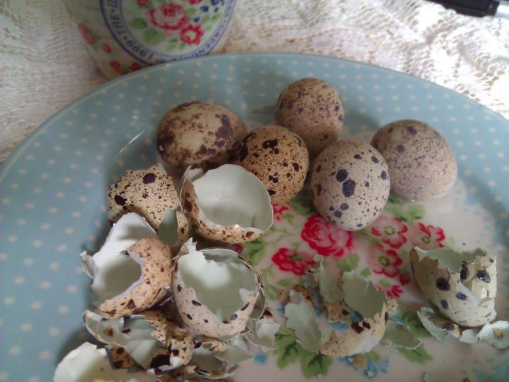 Vaktel egg Vaktelegg er en rik kilde til sporelementer, vitaminer  og mineraler.  Vaktel egg er en perle av naturen, gitt å helbrede oss. Under Antikken var vaktel egg brukt som healing/ naturmedisin på grunn avsine gode egenskaper. Vaktel egg er små (10-12 g), men de er en rik kilde til nytti...
